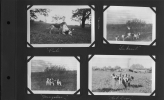"Photo Album29-1927 - Dogs-""Pals"", ""Youngsters"", ""Sinkenist"", ""Hot Dogs"""